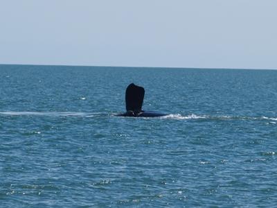 ballenas punta del estejpg
