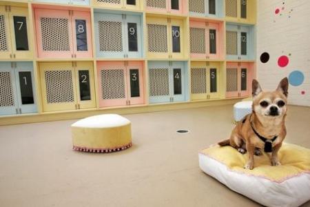 hoteles-perros-uruguay.jpg
